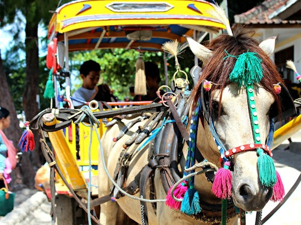 Transport on Gili Islands is by horse and cart