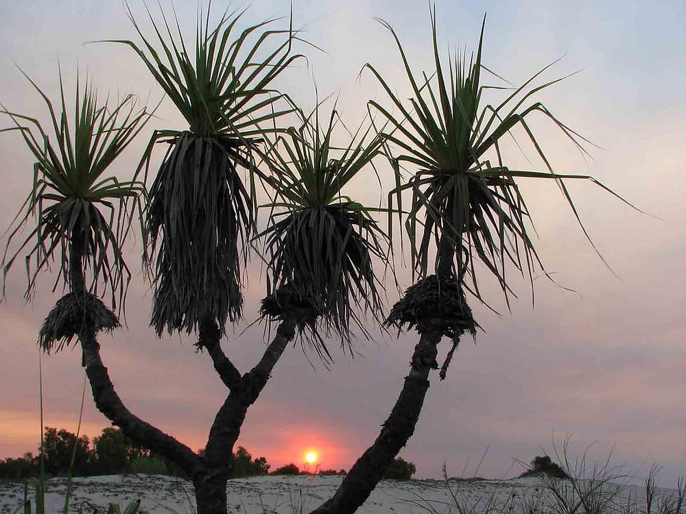 Lombadina Aboriginal cultural tours near Broome
