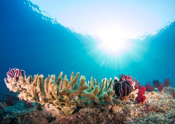 Coral and tropical fish, Atauro Island