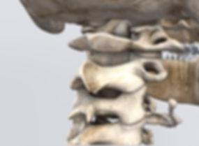 Cervical Spine.jpg