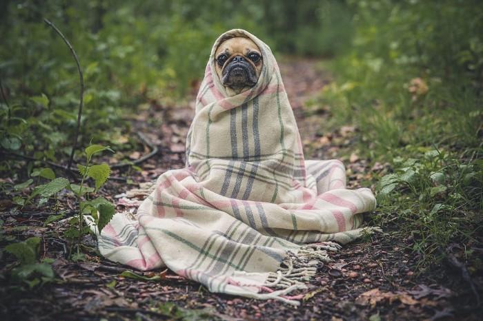 Собаки и конопля фото масло для загара с коноплей