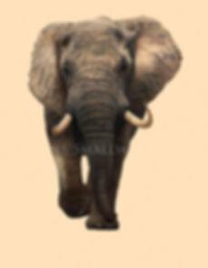 Elephant watermark.jpg
