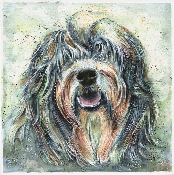 Balou-Bearded Collie
