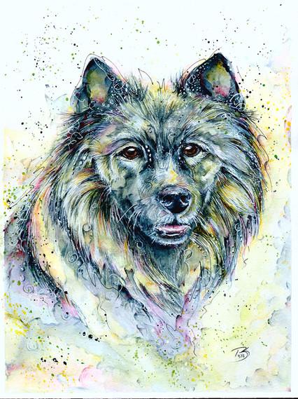 Tonks - Wolfsspitz
