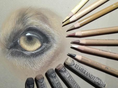 Warum ich so gerne Tiere zeichne - und wie es dazu kam