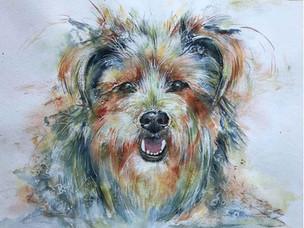 Bunter Hund - Terrier