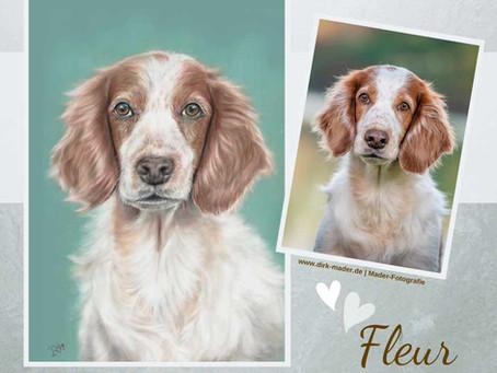 Fleur - Stöberhund - so entsteht ein Tierportrait in Pastelltechnik