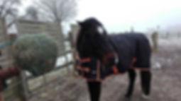 """Pferdebild """"Cadeaux"""", Nr. 2"""