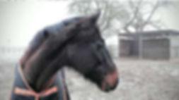 """Pferdebild """"Cadeaux"""", Nr. 6"""