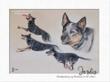 Jordis - Cattledog