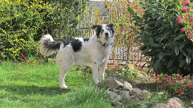 Hundebild als Vorlage für ein  Hundewarnschild