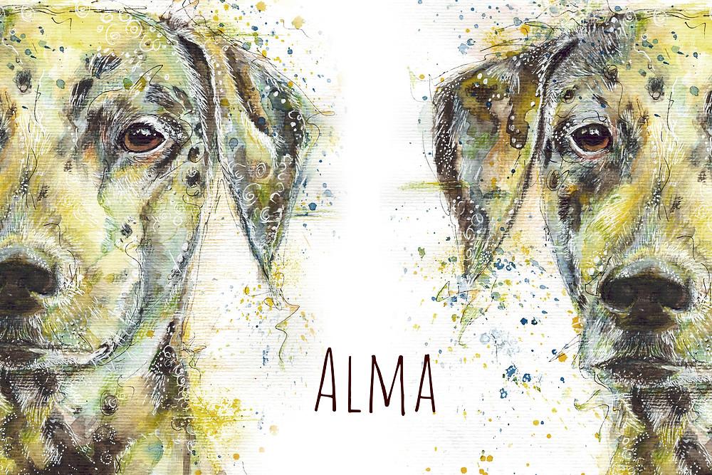 Alma - Dalmatinerhündin im Tierportrait