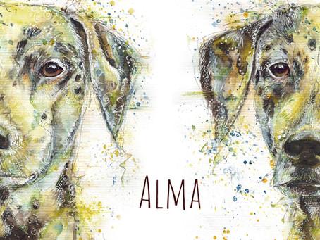 Alma - Dalmatinerhündin im Tier-Portrait