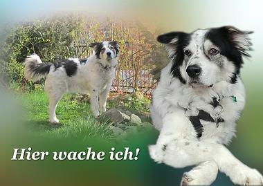 Hundebild im Hundewarnschild