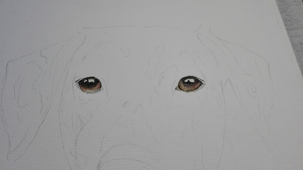 Erster Schritt - Die Augen