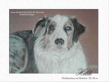 Hilde - Australian Shepherd