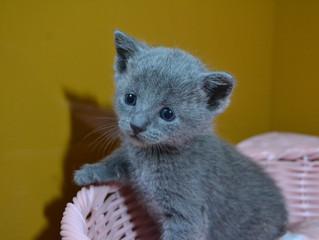 かわいい猫ちゃんの育て方のコツがわかってきました♪
