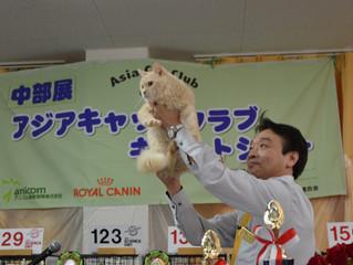 ラパーマのまきにゃん♂ACCキャットショーに初出陳!!