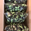 Thumbnail: Variety of Black & Green Licorice