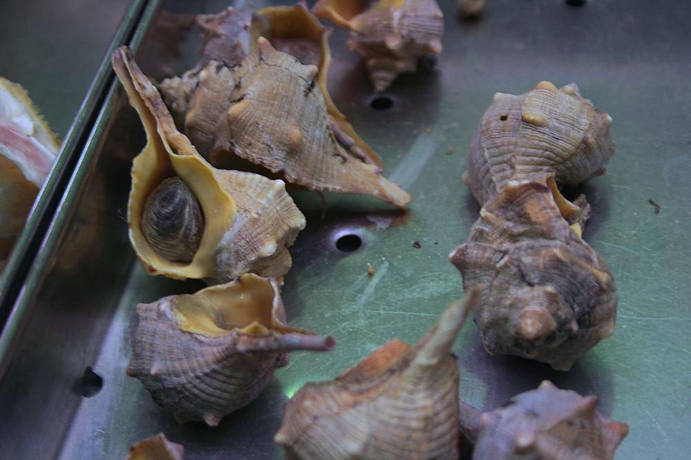 Раковины Murex brandaris L.