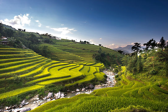 aerial-photography-of-rice-field-2131899