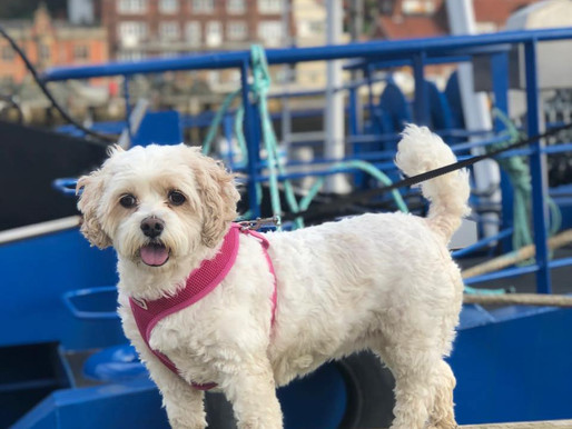 Paws For Thought…Dog Care In The Summer