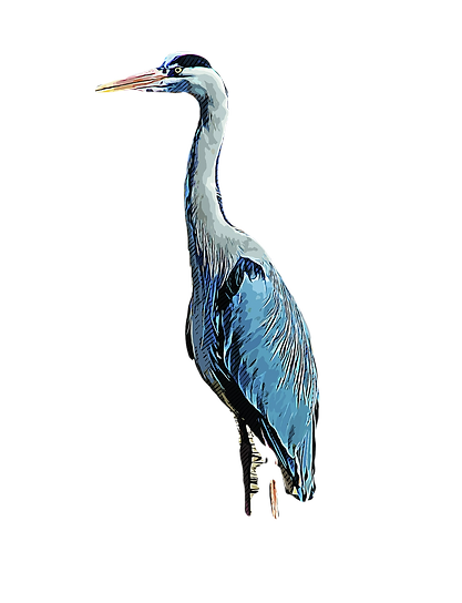 heron-5192274_1920_edited.png