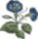 blue and green flower.png