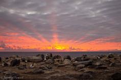Sunrise in the Colony, Isla Española