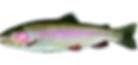 rainbow-trout-600.png