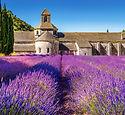 champ-de-lavande-en-provence-france-1000