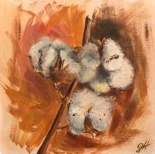 """Soft Cotton Study"""