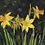Thumbnail: Spring Vibes