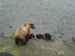 mama bear-cubs