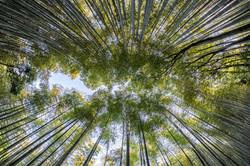 bamboo-1886974_1920
