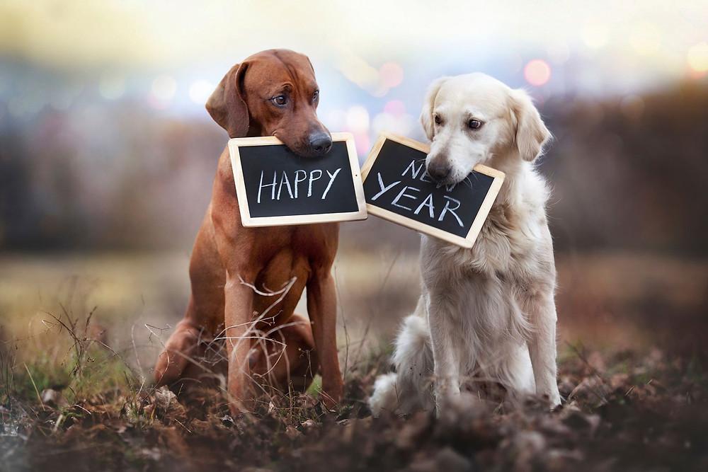 Happy New Year from La Barkeria
