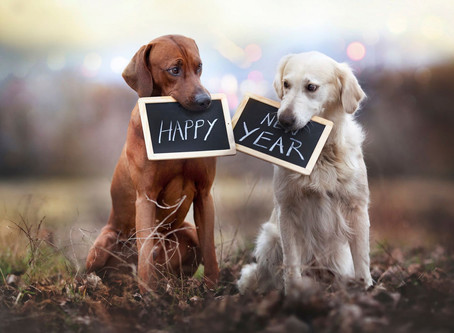 KEEP YOUR DOG SAVE ON NEW YEAR'S EVE