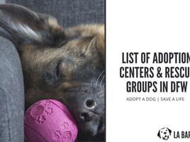 DOG ADOPTION CENTERS IN DFW