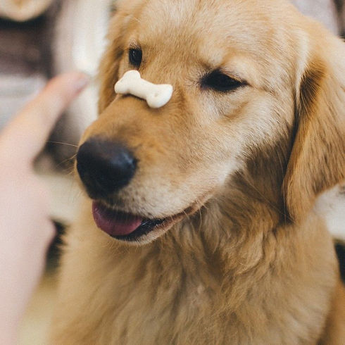 dog with treat on nose.jpg