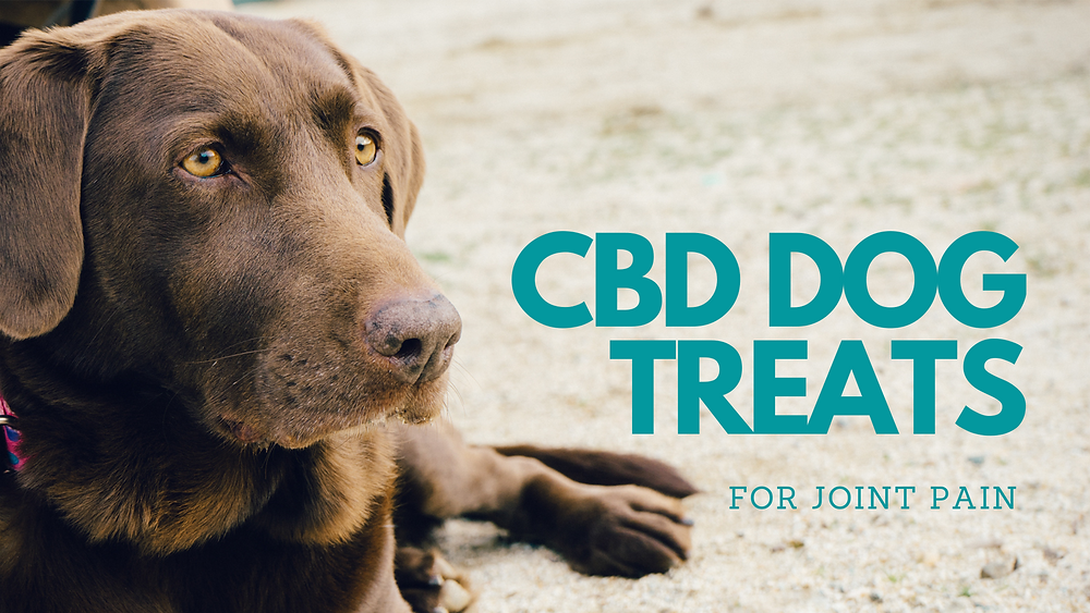 CBD can help dog's with joint pain