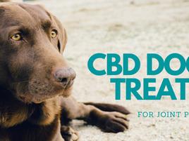 JOINT PAIN, CBD & DOGS