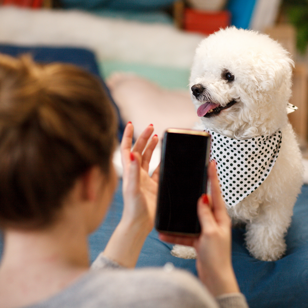 ScritchSpot is a one stop app for pet parents