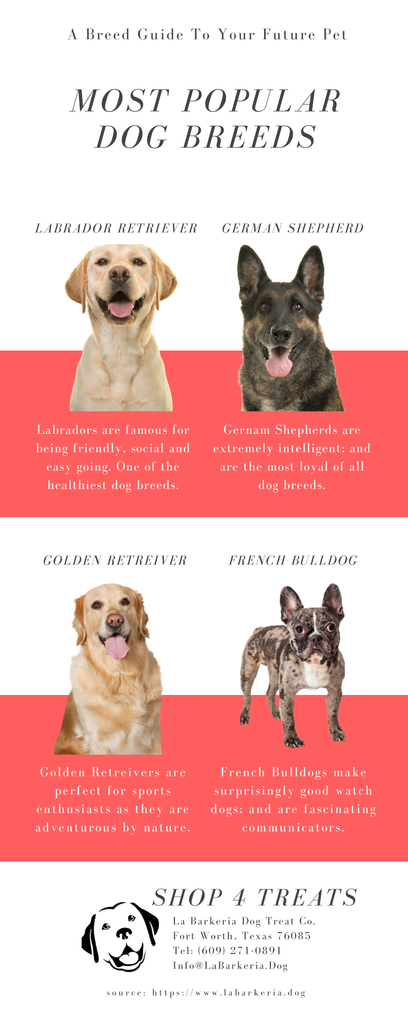 Ten most popular breeds of dogs according to the American Kennel Club