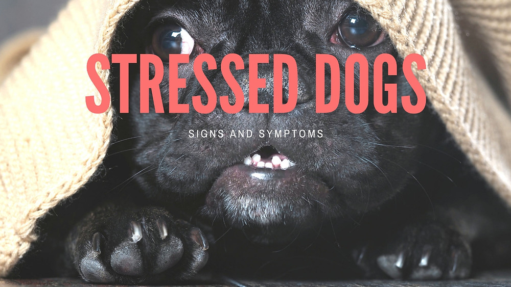 Signs & Symptoms of a Stressed Dog