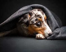 Does your dog withdraw, pace, drool, pant, whine tremble during a rain storm?
