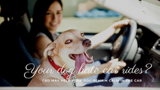 Travel Buddy: Help your Dog's with Car Anxiety
