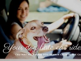 Travel Buddy: help your dog's car anxiety