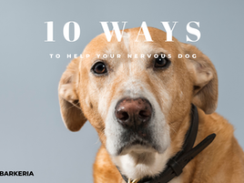 10 Ways to Help a Nervous Dog