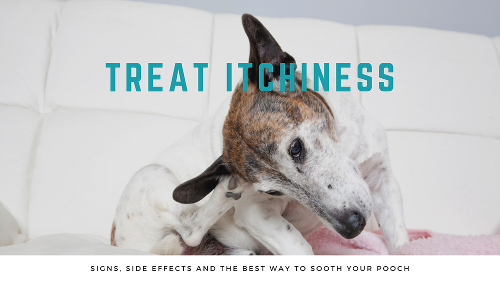 Treat Canine Itchiness