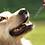 Thumbnail: 600MG PET DROPPER (30ML)